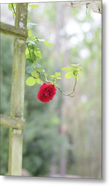 Red Flower Garden Metal Print