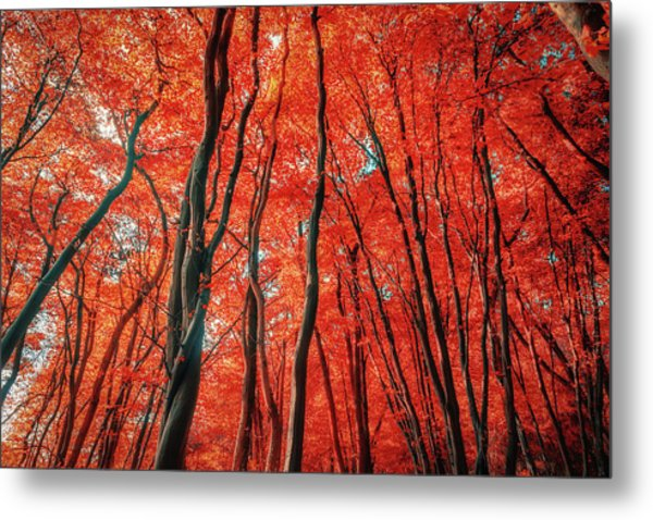 Red Forest Of Sunlight Metal Print