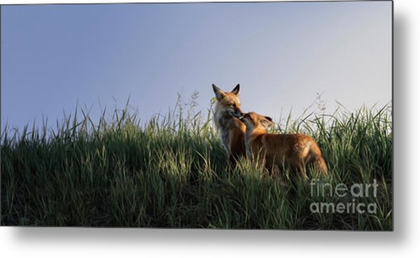 Red Fox Morning Metal Print