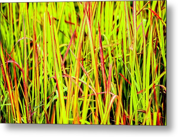 Red Green And Yellow Grass Metal Print