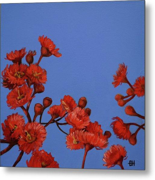 Red Gum Blossoms Metal Print