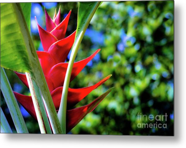 Red Heliconia Hawaii Metal Print by D Davila