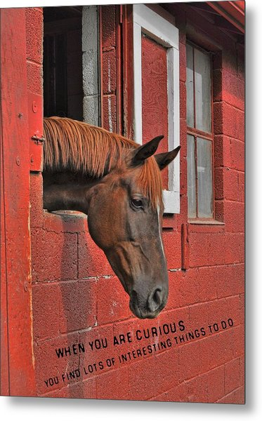 Red Horse Quote Metal Print