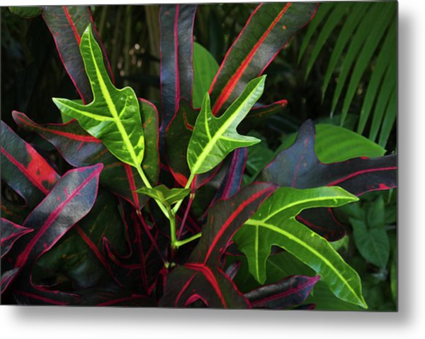 Red Hot And Green Metal Print