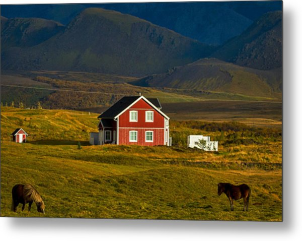 Red House And Horses - Iceland Metal Print