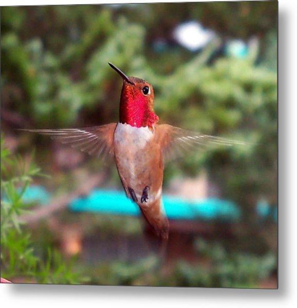 Red Hummingbird Metal Print
