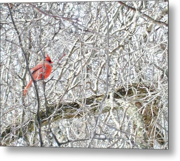 Red In White Metal Print by Justin  Randy