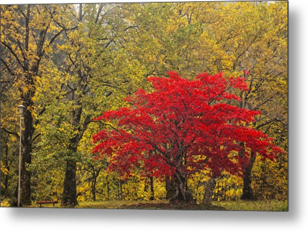 Red Into Yellow Metal Print
