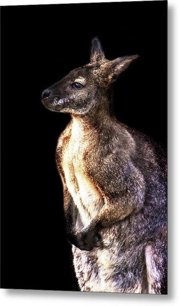 Red Kangaroo Metal Print