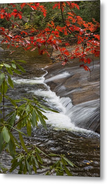 Red Leaf Falls Metal Print