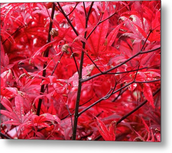 Red Leaves And Stems 2 Pd Metal Print by Lyle Crump
