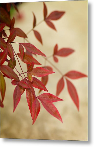 Red Leaves Metal Print by Bob Coates