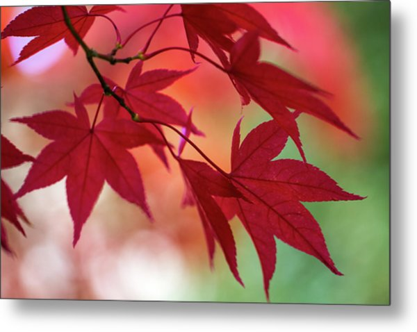 Metal Print featuring the photograph Red Leaves by Clare Bambers