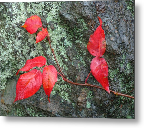 Red Leaves Metal Print by Juergen Roth