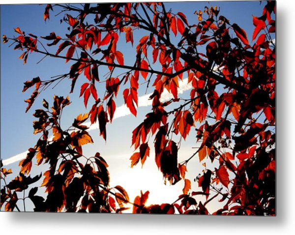 Red Leaves Part 1 Metal Print by Joseph Peterson
