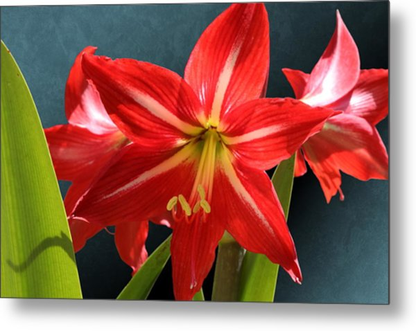 Red Lily Flower Trio Metal Print