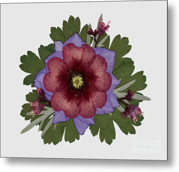 Red Open Faced Potentilla Pressed Flower Arrangement Metal Print