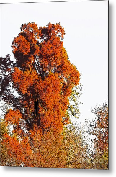 Red-orange Fall Tree Metal Print