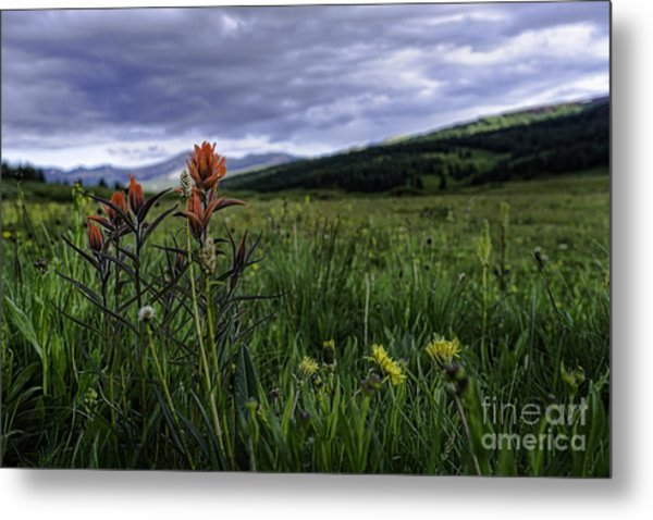 Red Paintbrush Metal Print