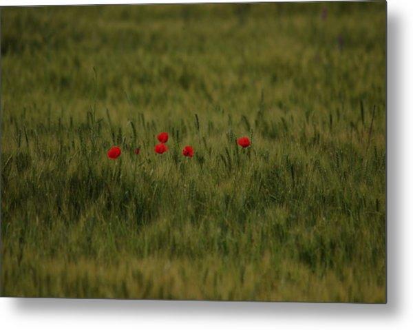 Red Poppies In Meadow Metal Print