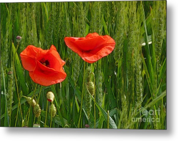 Red Poppy Flowers In Grassland 2 Metal Print