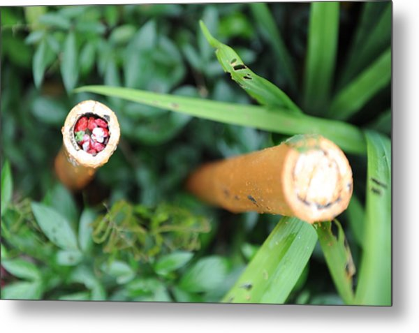 Red Rocks In A Bamboo Stick Metal Print by Jessica Rose
