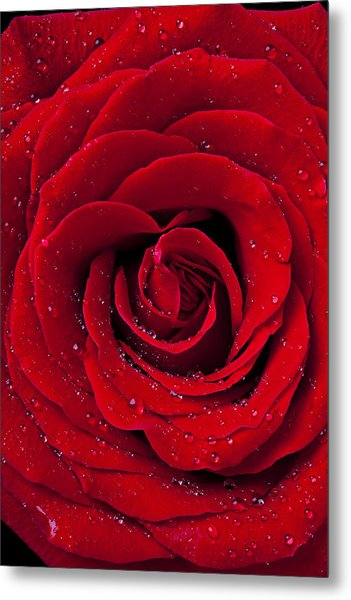 Red Rose With Dew Metal Print