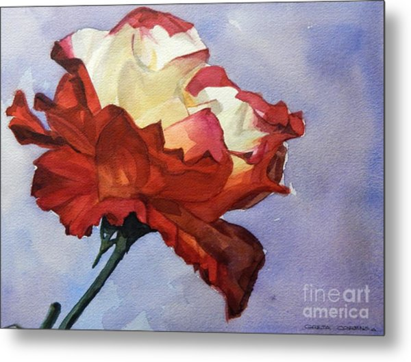 Watercolor Of A Red And White Rose On Blue Field Metal Print