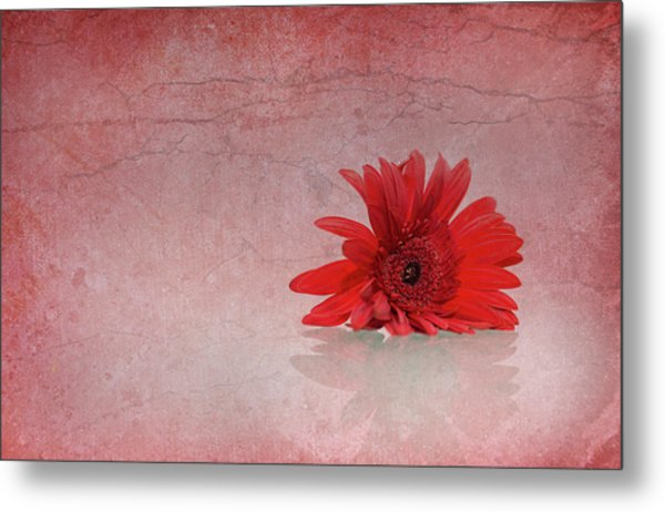 Red Scent Metal Print