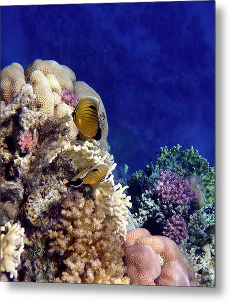 Red Sea Exotic World Metal Print