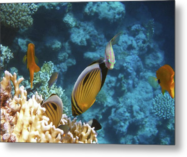 Red Sea Magical World Metal Print