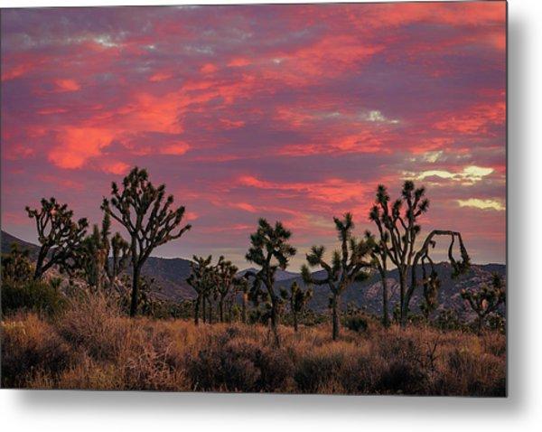 Red Sky Over Joshua Tree Metal Print