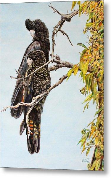 Red Tail Black Cockatoos Metal Print