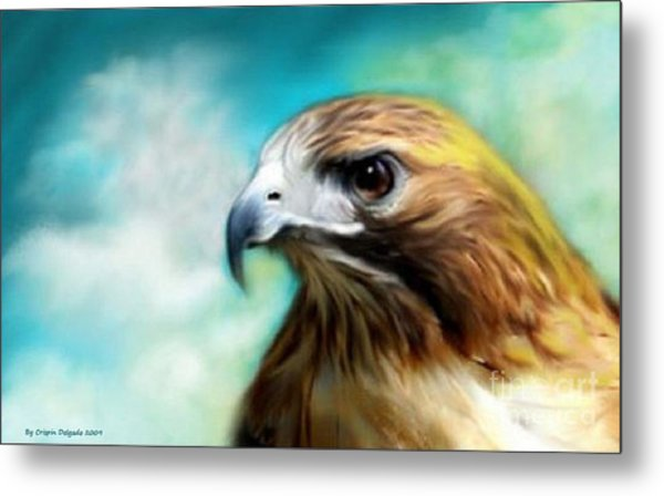 Red Tail Hawk  Metal Print by Crispin  Delgado