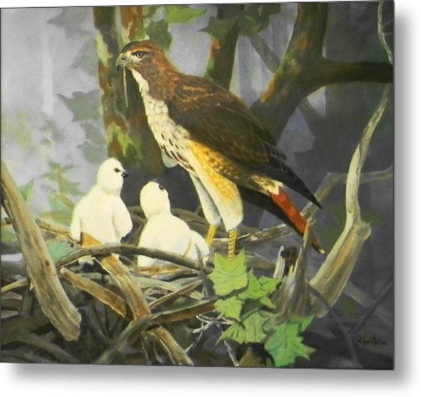 Red-tailed Hawk And Chicks Available Metal Print