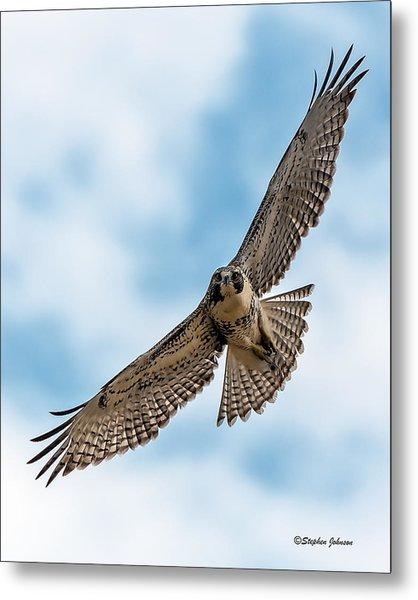 Red-tailed Hawk Coming At Me Metal Print
