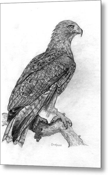 Red Tailed Hawk Metal Print by Cynthia  Lanka