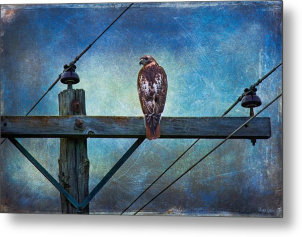 Red-tailed Hawk On Power Pole Metal Print