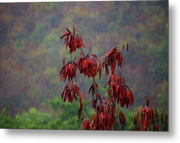 Red Tree In The Rain Metal Print