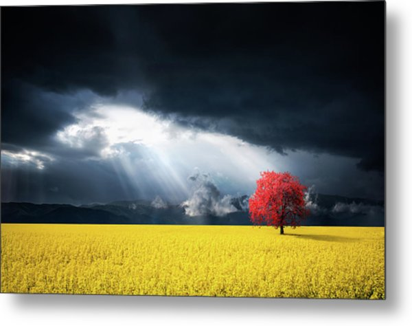Red Tree On Canola Meadow Metal Print
