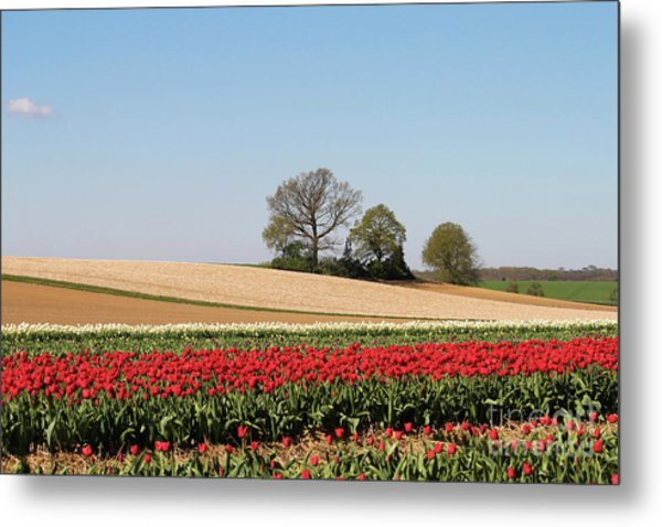 Red Tulips Landscape Metal Print