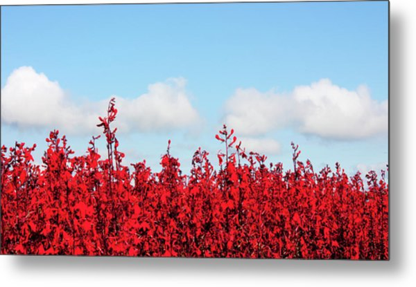 Red White And Blue Metal Print by Barbara  White