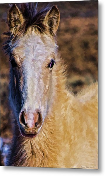 Red Willow Pony Metal Print