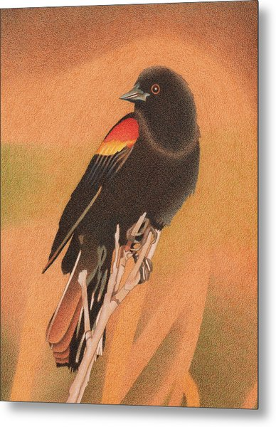 Red-winged Blackbird 3 Metal Print
