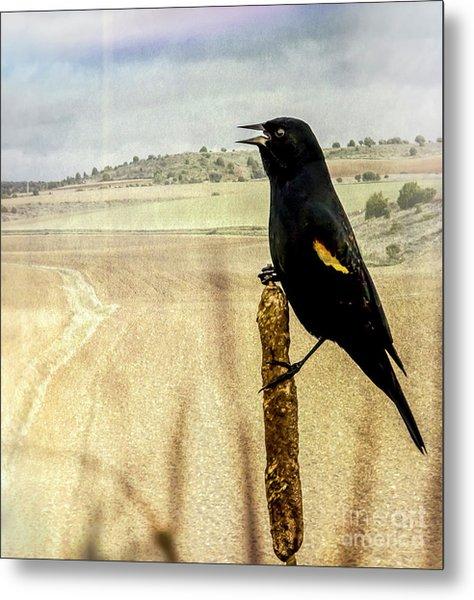 Red-winged Blackbird Metal Print
