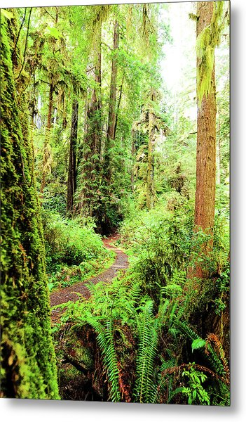 Red Woods Trail Metal Print