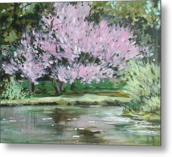 Redbud Reflections Metal Print