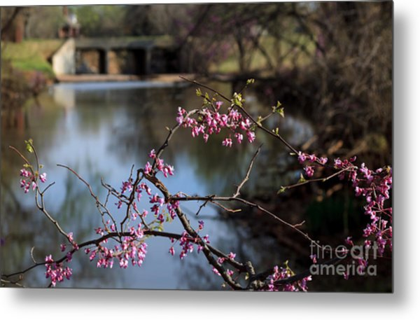 Redbuds And An Old Bridge Metal Print