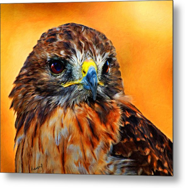 Redtailed Hawk Metal Print