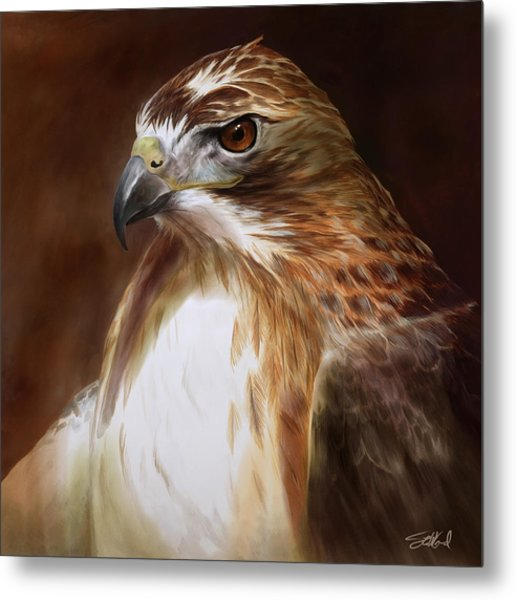 Redtailed Hawk Portrait Metal Print